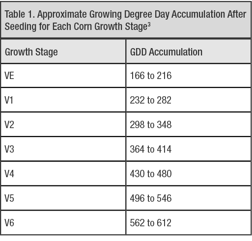 Adapted from Table 5.2 Comparison between leaf collar and FCIC corn growth staging systems for a 120-day relative maturity hybrid, Nleya, T., Chungu, C., and Kleinjan, J. 2019. Corn growth and development. Chapter 5. Best Management Practices for Corn Production. South Dakota State University. Permission to use granted by Dr. Thandiwe Nleya, South Dakota State University. (Information within Table 5.2 sourced from FCIC (Federal Crop Insurance Corporation) Corn Loss Adjustment Standard Handbook, 2007).