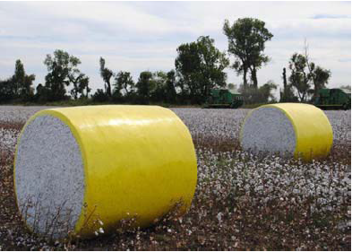 Figure 1. Plastic wrap on round cotton bales helps protect harvested cotton until ginning.