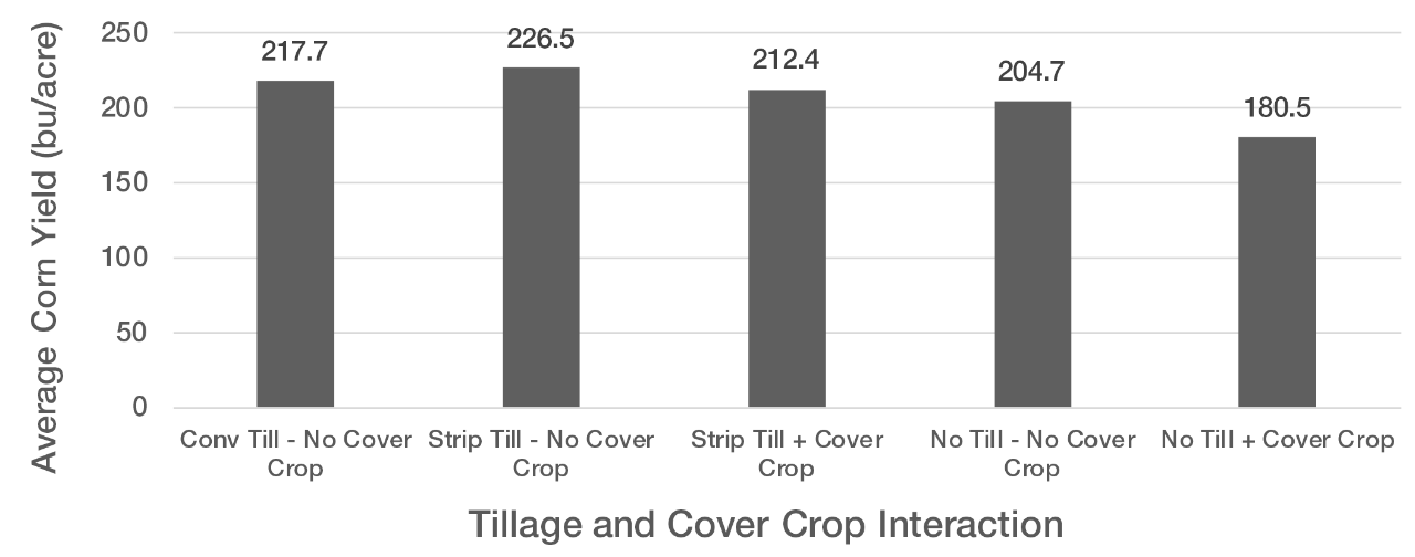 Figure 2. Average corn yield after being planted in various combinations of tillage with or without a cover crop.