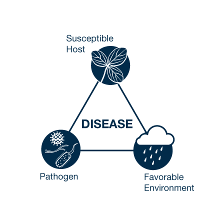 Figure 1. Disease triangle. Disease only occurs when the pathogen is present with a susceptible host and the environment favors disease. The amount of time spent in conditions favorable for specific diseases results in the overall amount of disease.