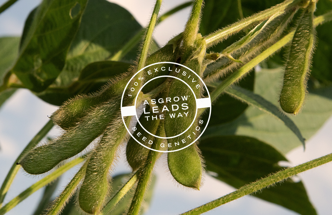 Asgrow® soybeans at growing season