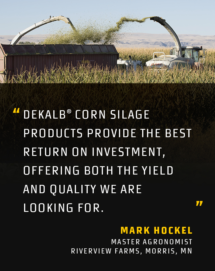 DEKALB® Silage Quote Mark Hockel Mobile