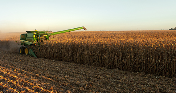 DEKALB® combine in corn field at harvest