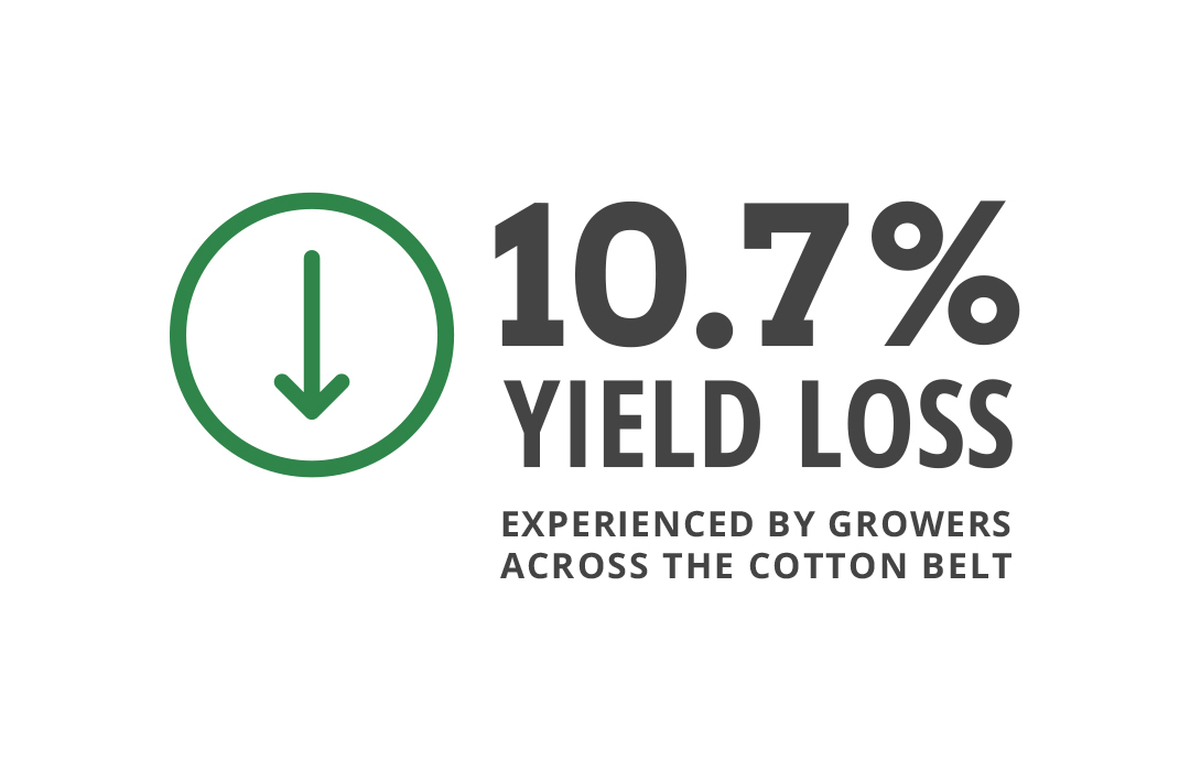Deltapine growers across the cotton belt experienced 10.7% decrease in yield loss to nematodes