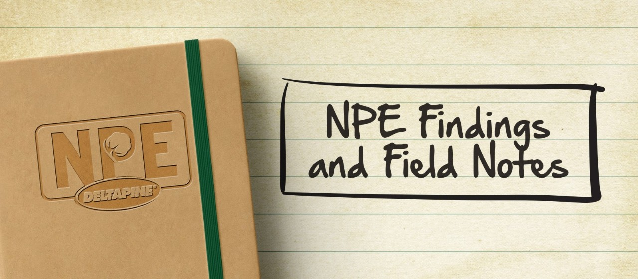 NPE findings and field notes