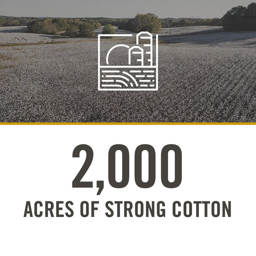 2000 acres of strong cotton