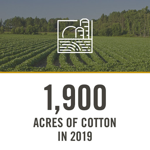 1,900 acres of cotton in 2019