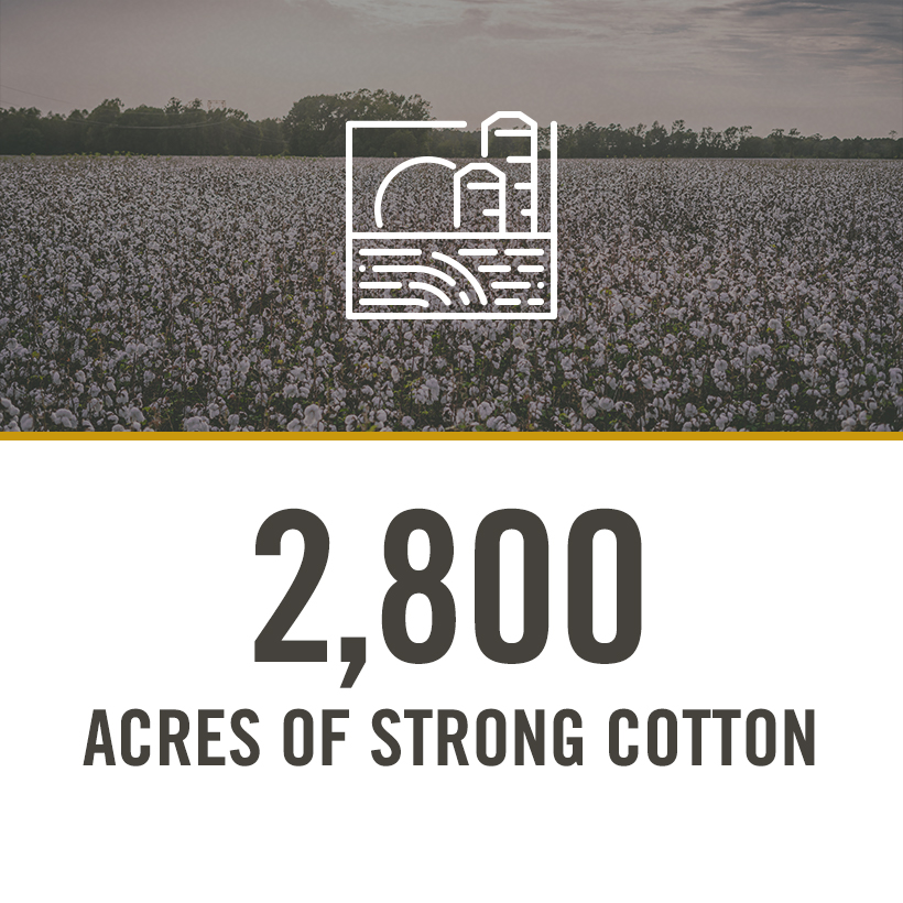 2800 acres of strong cotton